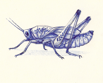 Grasshopper - drawing by Jonathan Huff